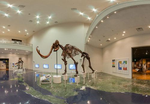 導入実績に「 北海道博物館」を追加しました